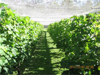 Boutique Vineyard for Sale on 10  Vacant Acres