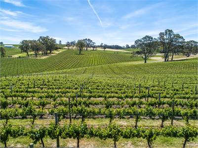 Exceptional Boutique Vineyard with Guaranteed Lease Income