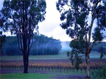 Tammar Gully Vineyard ~ Award Winning Wine Producer & Stunning Lifestyle Property