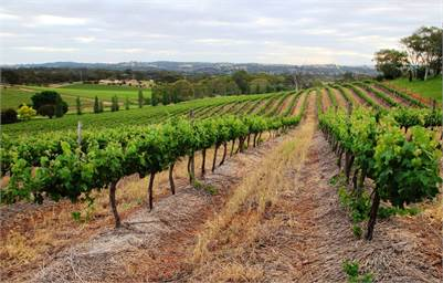 Premium Clare Valley Vineyard - 51 acres