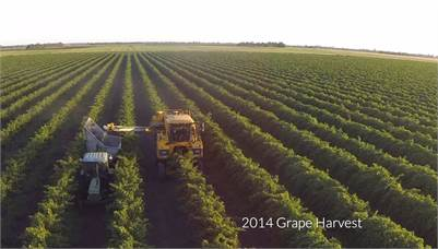 Myall Park Vineyard Aggregation