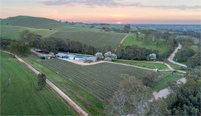 Barossa Winery Opportunity