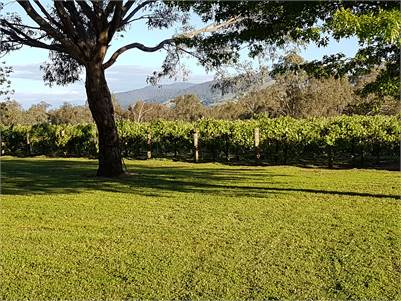 North East Vic Boutique vineyard with new cellar door and function area.  A tree change with income.