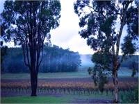 Tammar Gully Vineyard ~ Award Winning Wine Producer & Stunning Lifestyle Property